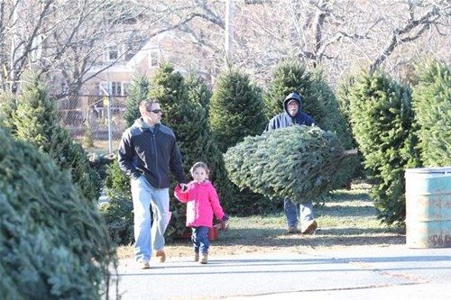 Marshfield Kiwanis Christmas Trees
