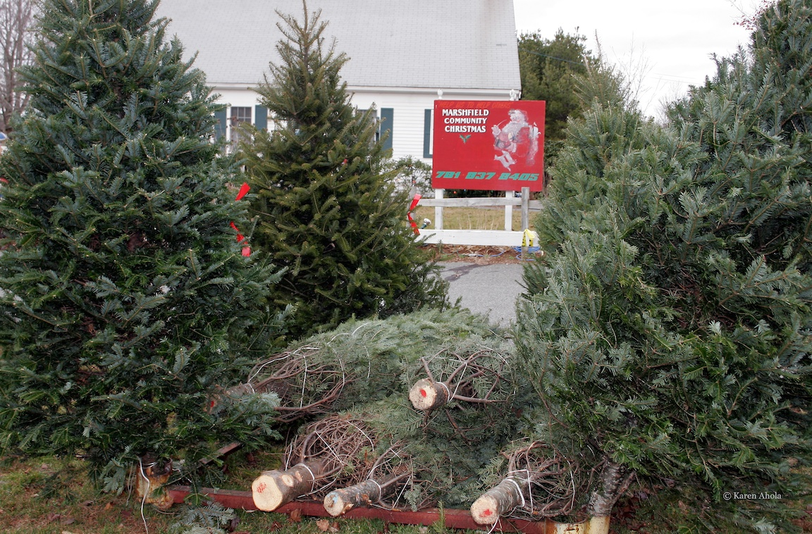 Marshfield Kiwanis Christmas Trees & Wreaths Sale